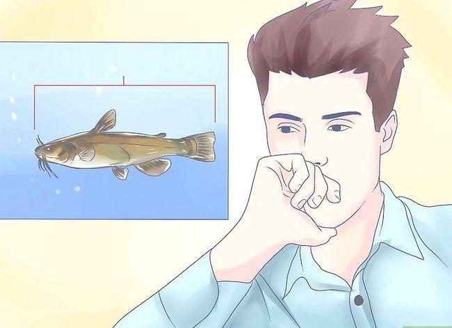 Prent getiteld Hou `n Bullhead Catfish Stap 1