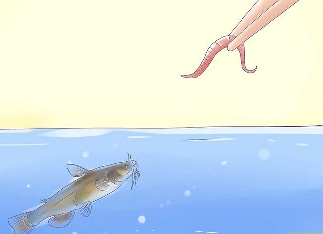Prent getiteld Hou `n Bullhead Catfish Stap 5