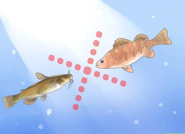 Prent getiteld Hou `n Bullhead Catfish Stap 7