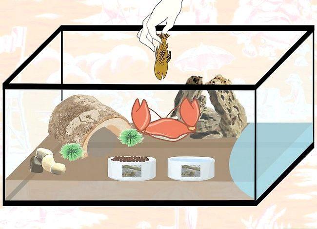 Prent getiteld Kyk na troeteldiere Crabs Stap 7