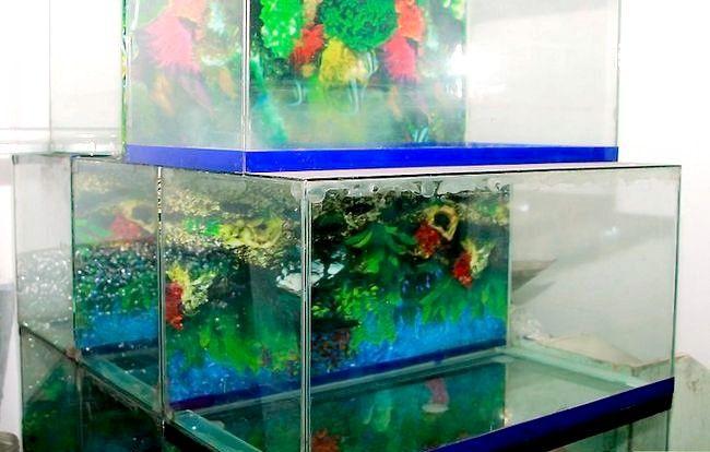 Prent getiteld Sorg vir jou Carnival Goldfish Stap 3