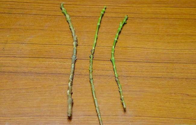 Prent getiteld Groei Bloei Plante Deur Stingels Stap 5