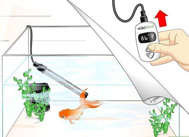Prent getiteld Cure Goldfish Ich Stap 4