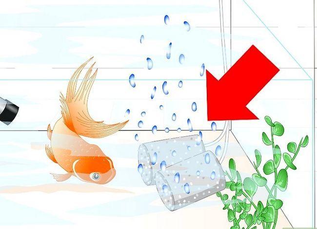 Prent getiteld Cure Goldfish Ich Stap 5