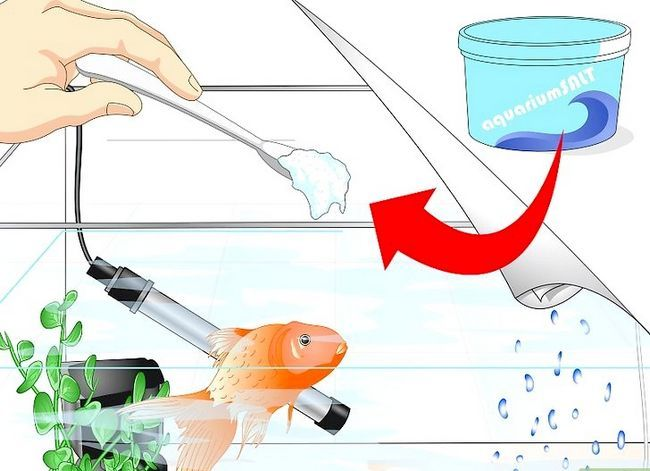 Prent getiteld Cure Goldfish Ich Stap 6