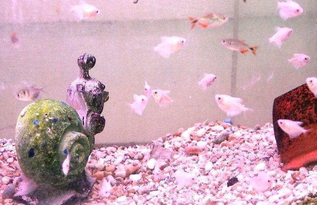 Prent getiteld Versier die Perfect Fish Tank Inleiding