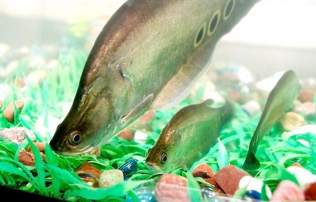 Prent getiteld Versier `n Aquarium Stap 1Bullet2