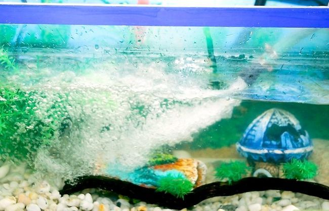 Prent getiteld Versier `n Aquarium Stap 8