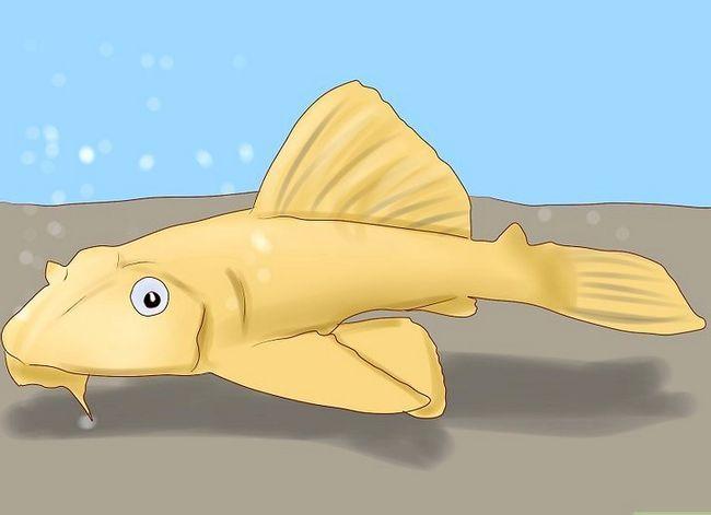 Prent getiteld Ontsnap van Slakke in Aquarium Stap 4