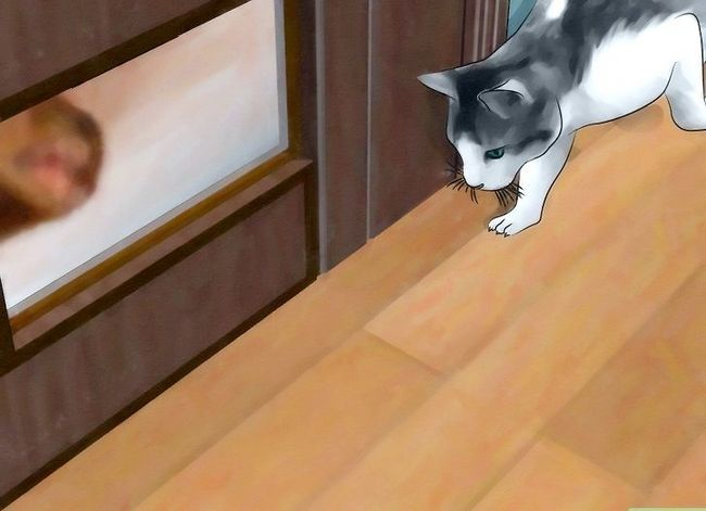 Prent getiteld Hou `n Fisher Cat Away Stap 2