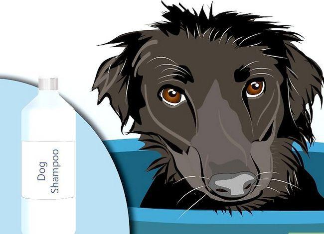 Beeld getiteld Effektief ontslae raak van bosluise van jou honde Stap 1