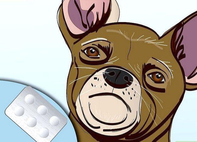 Beeld getiteld Effektief ontslae raak van bosluise van jou honde Stap 2