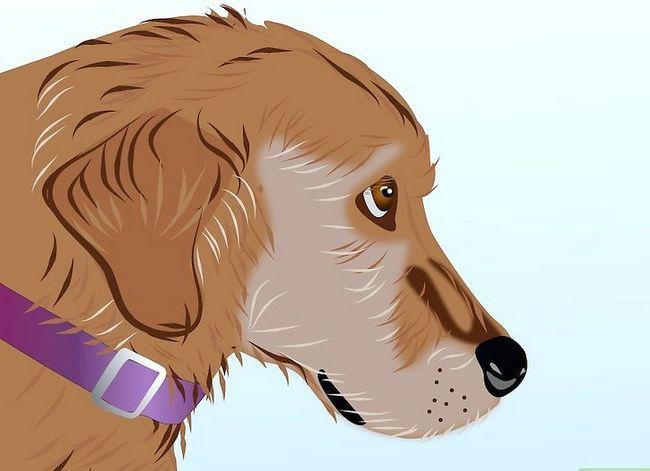 Beeld getiteld Effektief ontslae raak van bosluise van jou honde Stap 4