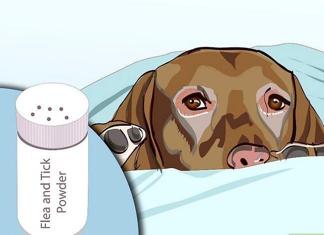 Beeld getiteld Effektief ontslae raak van bosluise van jou honde Stap 7