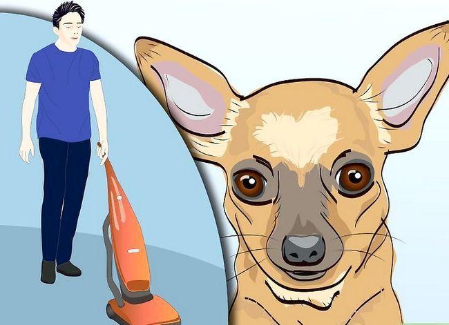Prentjie getiteld Doeltreffend ontslae van bosluise van jou honde Stap 8