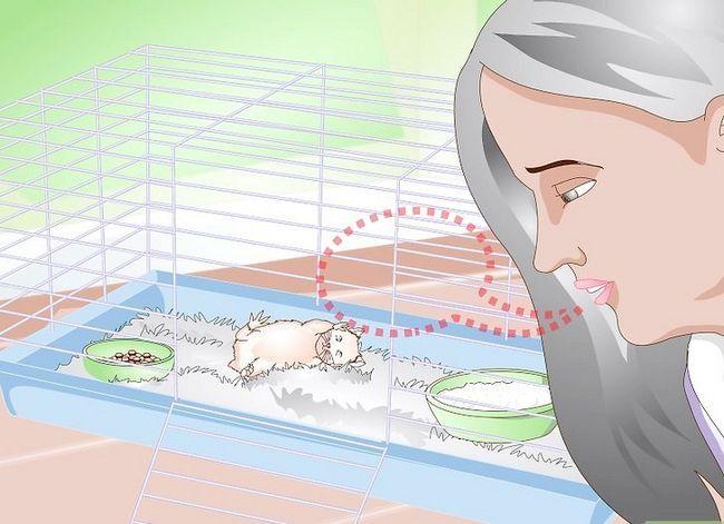 Beeld getiteld Maak jou hamster wakker sonder om dit te skrik. Stap 1