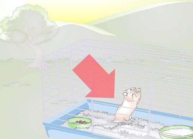 Beeld getiteld Ontwaak jou hamster sonder om dit te skrik Stap 11
