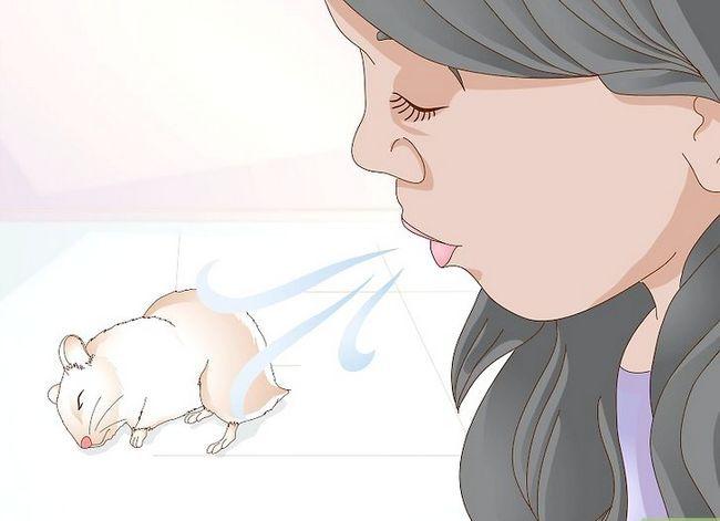 Beeld getiteld Wake up Your Hamster sonder om dit te skrik Stap 3