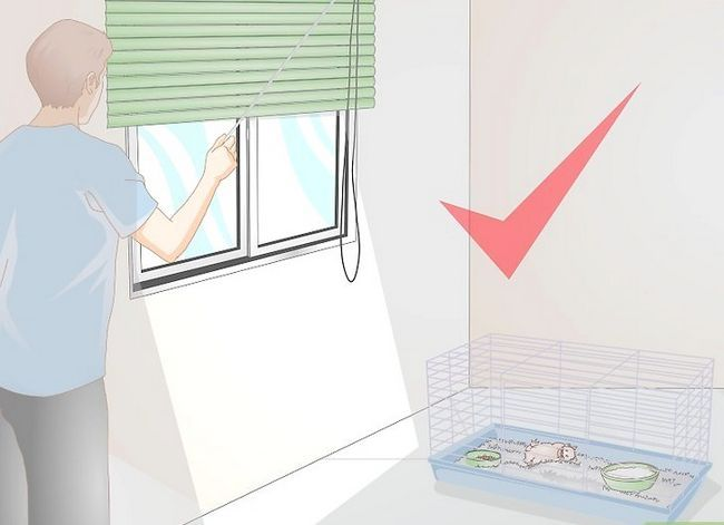 Beeld getiteld Maak jou hamster wakker sonder om dit te skrik. Stap 6