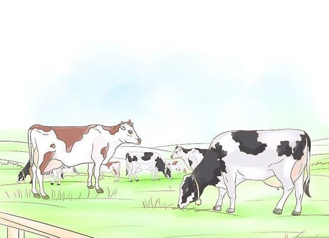 Hoe om vas te stel hoeveel vee per hektaar weiding ondersteun word