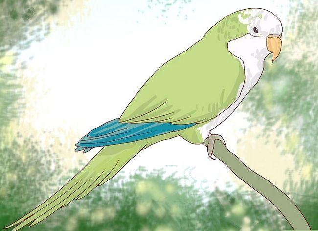 Prent getiteld Vertel die geslag van papegaaie Stap 4