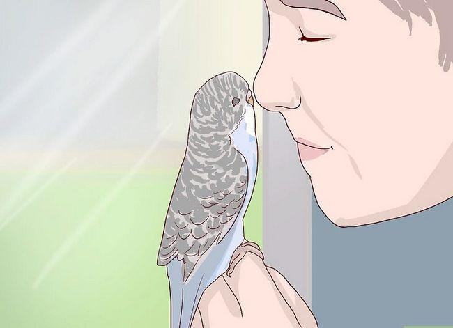 Prent getiteld Vertel die geslag van papegaaie Stap 10