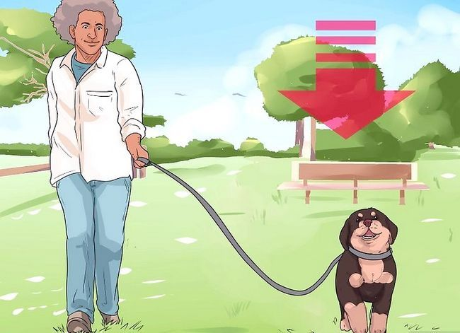 Prent getiteld Artritis diagnoseer in Rottweilers Stap 12