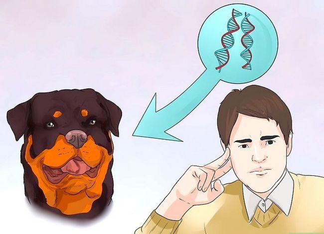 Beeld getiteld Artritis diagnoseer in Rottweilers Stap 10