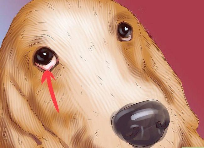Prent getiteld Diagnose Vitiligo in Honde Stap 4