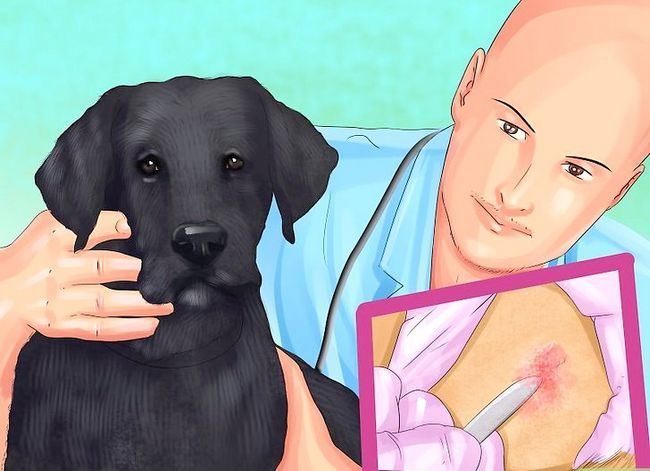 Prent getiteld Diagnose Vitiligo in Honde Stap 6