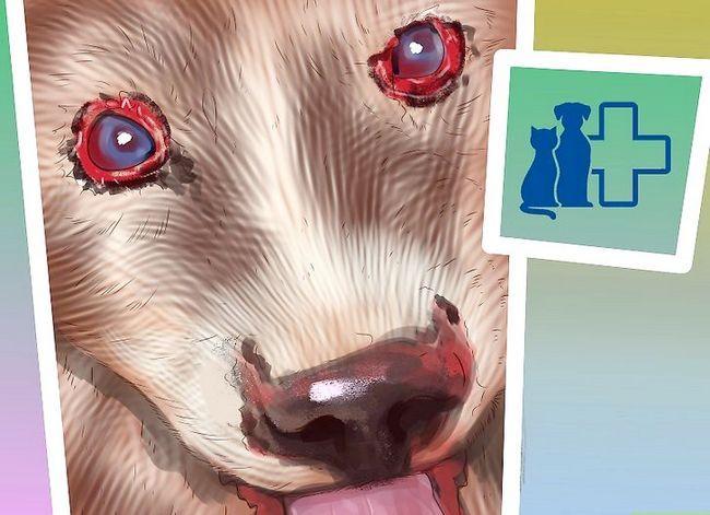 Prent getiteld Diagnose Vitiligo in Honde Stap 7