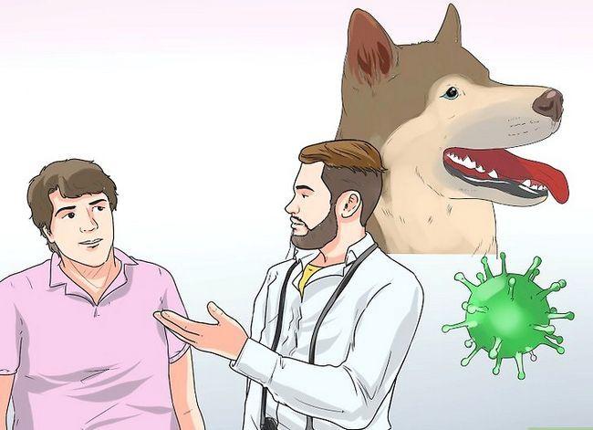 Prent getiteld Diagnose autoimmuniese afwykings in Siberiese Huskies Stap 5