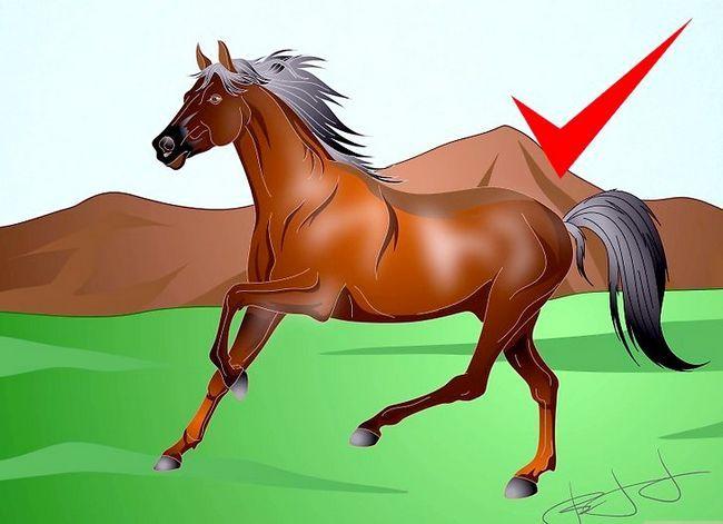 Prent getiteld Teken `n Realistic Looking Horse Stap 12