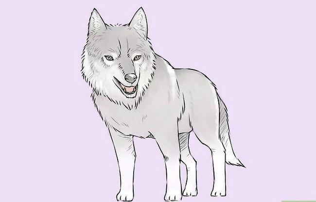 Prent getiteld Teken `n Wolf Stap 19