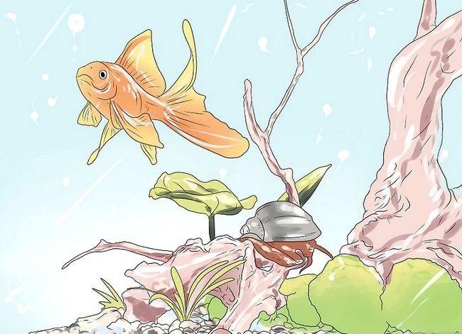 Prent getiteld Geniet met troeteldier vis Stap 4