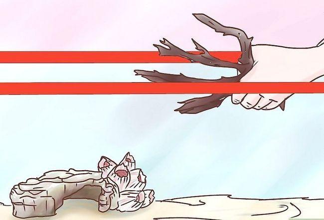 Prent getiteld Elimine Myte uit `n troeteldier Hermit Crab Tank Stap 7