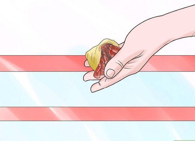 Prent getiteld Elimine Myte uit `n troeteldier Hermit Crab Tenk Stap 8