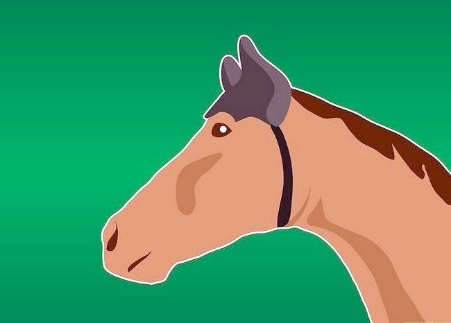 Prent getiteld Get rid of Horse Flies Stap 13
