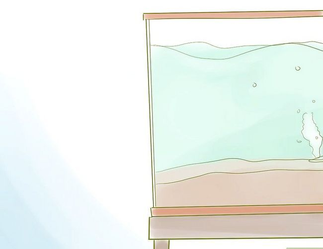 Prent getiteld Begin `n Saltwater Aquarium Stap 8