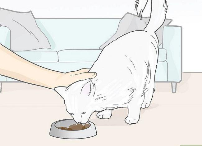 Prent getiteld Omgaan met die dood van jou kat Stap 13
