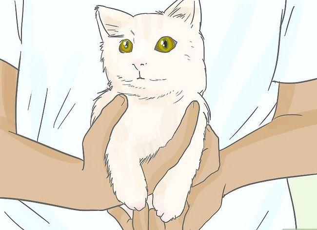 Prent getiteld Omgaan met die dood van jou kat Stap 14