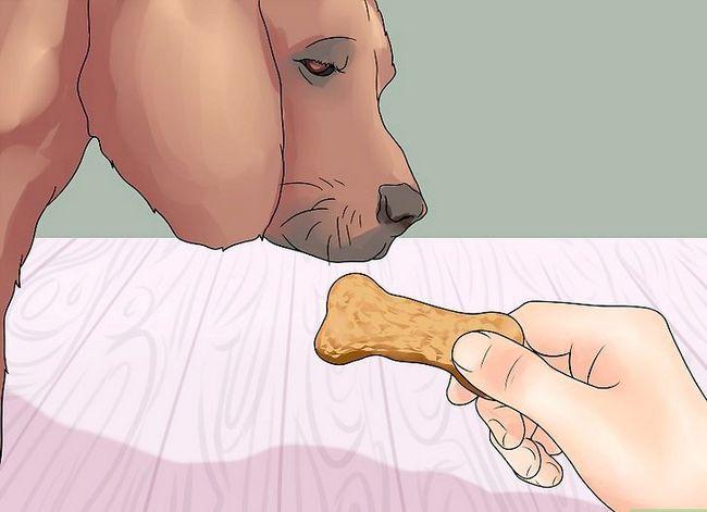 Hoe om jou hond te leer om die been te gee