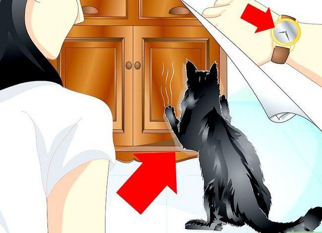 Beeld getiteld Trein jou kat om nie die meubels te krap nie Stap 1
