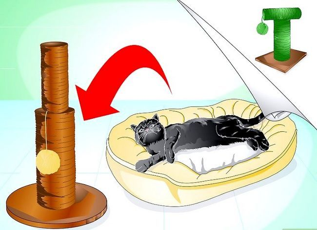 Beeld getiteld Trein jou kat om nie die meubels te krap nie Stap 3