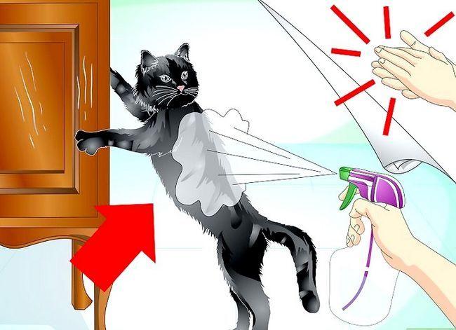 Beeld getiteld Trein jou kat om nie die meubels te krap nie Stap 4