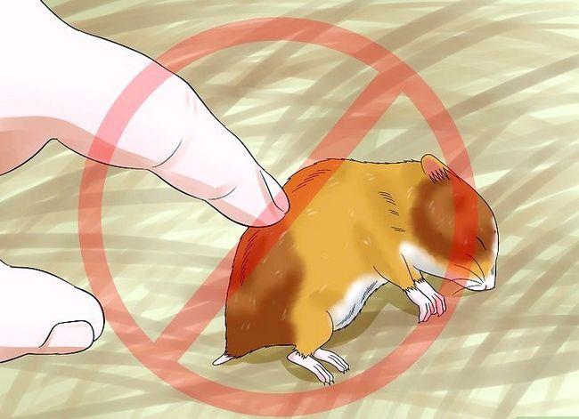 Prent getiteld Trein `n hamster om nie Stap 14 te byt nie