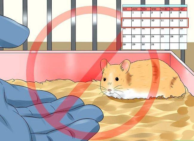 Prent getiteld Trein `n hamster om nie Stap 2 te byt nie