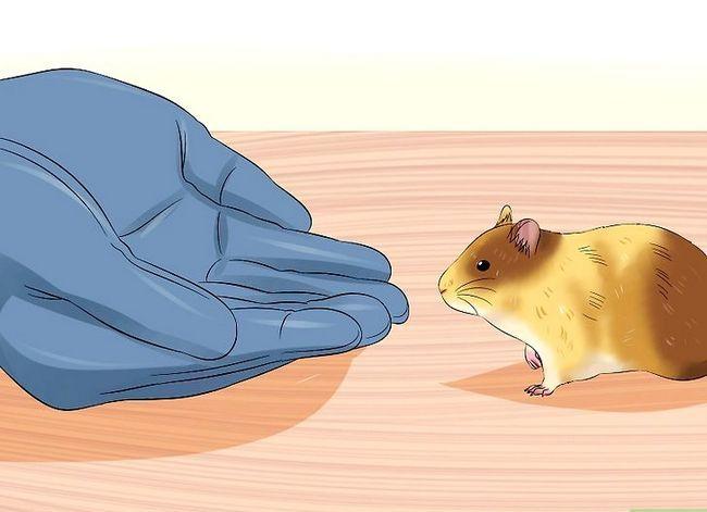 Prent getiteld Trein `n hamster om nie Stap 3 te byt nie