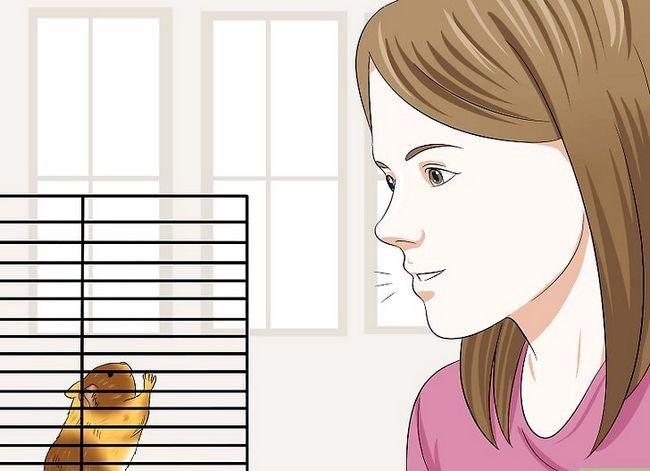 Prent getiteld Trein `n hamster om nie Stap 5 te byt nie