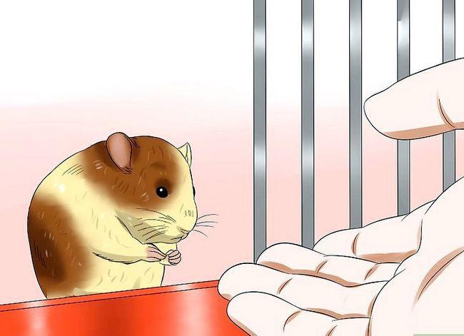 Prent getiteld Trein `n hamster om nie Stap 6 te byt nie